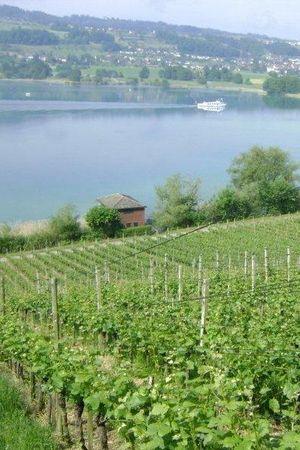 Weingut Lindenmann, Seengen