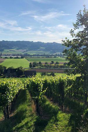 Degustation bei der Weinbaugenossenschaft Saffergarten Altwis