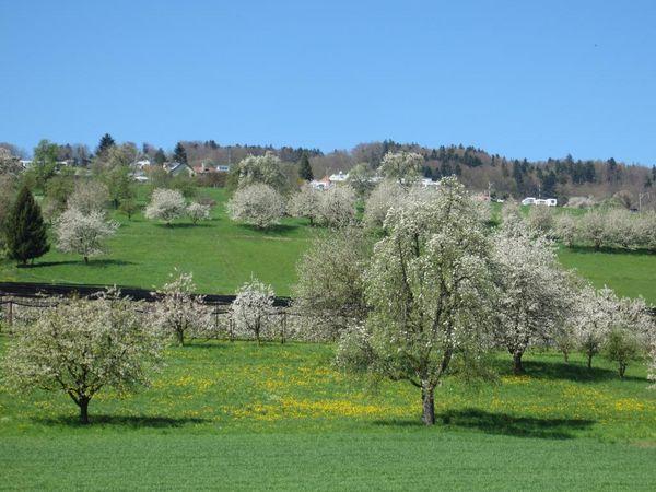Hochstammland Tour
