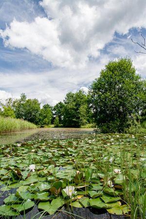 Naturschutzgebiet Vogelmoos, Neudorf