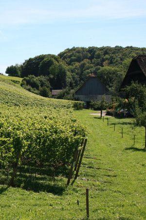 Degustation auf dem Weingut Klosterhof, Aesch